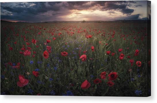 Summer Flowers Canvas Print - Poppies by Alvaro S?nchez