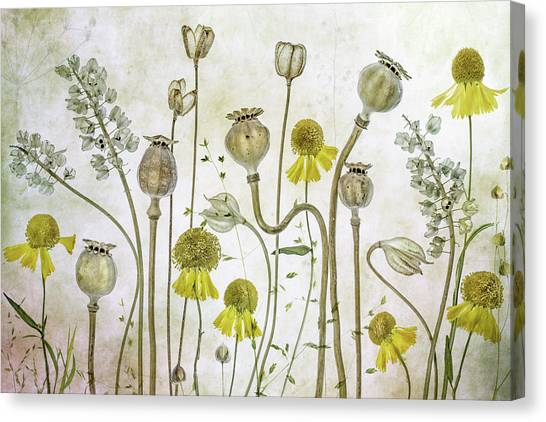 Poppies And Helenium Canvas Print by Mandy Disher
