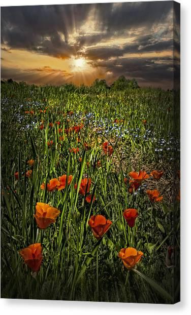 Poppys Canvas Print - Poppies Art by Debra and Dave Vanderlaan