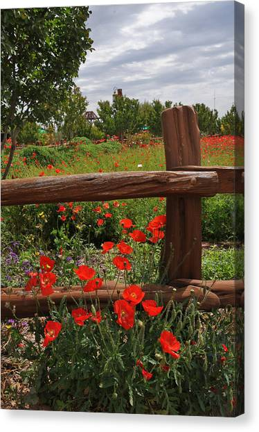 Poppies At The Farm Canvas Print
