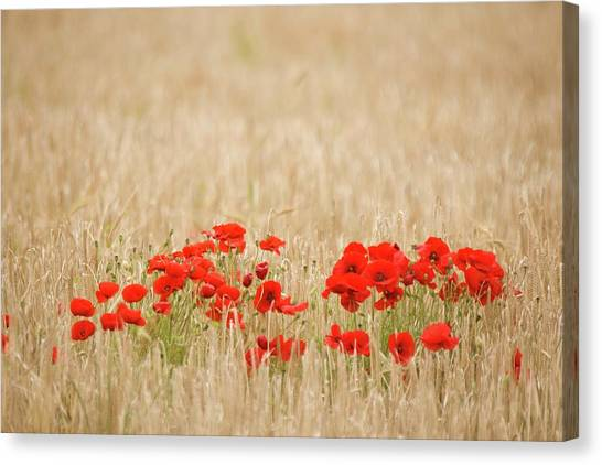 Remembrance Poppies Canvas Prints (Page #10 of 33) | Fine Art America