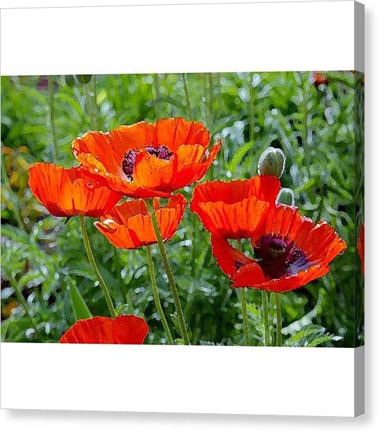 Grove Canvas Print - Poppies by Niki Crawford