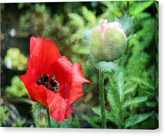 Canvas Print featuring the digital art Poppy 1 by Helene U Taylor
