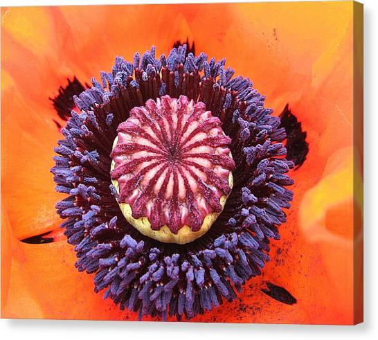 Poppy Delight Canvas Print