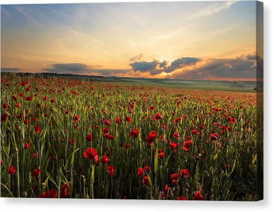 Poppys Canvas Print - Poppy Field by Ian Hufton