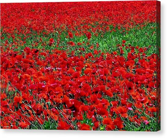 Poppy Field Canvas Print by Jacqueline M Lewis