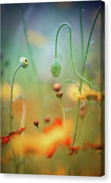 Poppy Field Canvas Print by Steve Moore