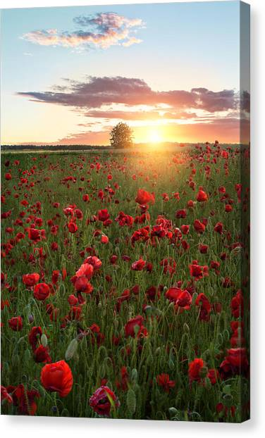 Poppy Fields Of Sweden Canvas Print by Christian Lindsten