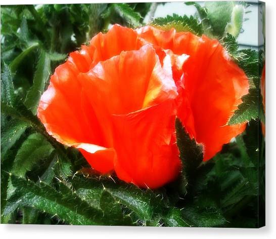 Poppy Flower Canvas Print by Heather L Wright