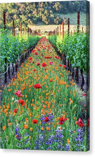 Poppy Lined Vineyard Canvas Print