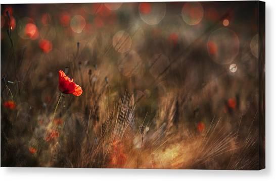 Romantic Flower Canvas Print - Poppy by Nicodemo Quaglia