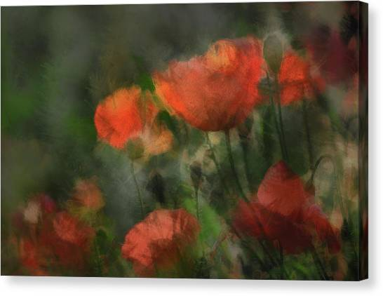 Pops Canvas Print by Gilbert Claes