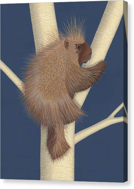 Porcupine Canvas Print by Nathan Marcy