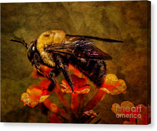 Portrait Of A Bee Canvas Print