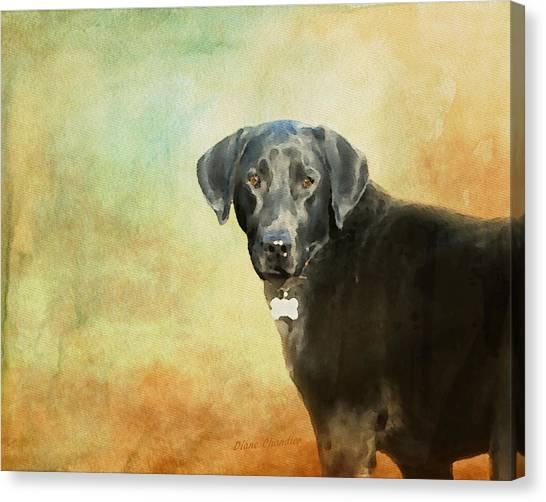 Portrait Of A Black Labrador Retriever Canvas Print