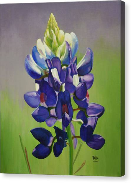 Portrait Of A Bluebonnet Canvas Print