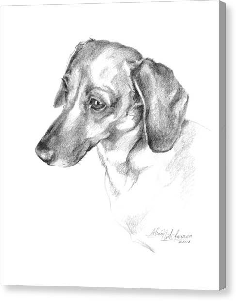 Portrait Of A Dachshund Paying Attention Canvas Print