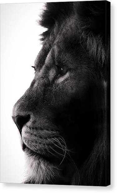 Rulers Canvas Print - Portrait Of A Lion by Martin Newman