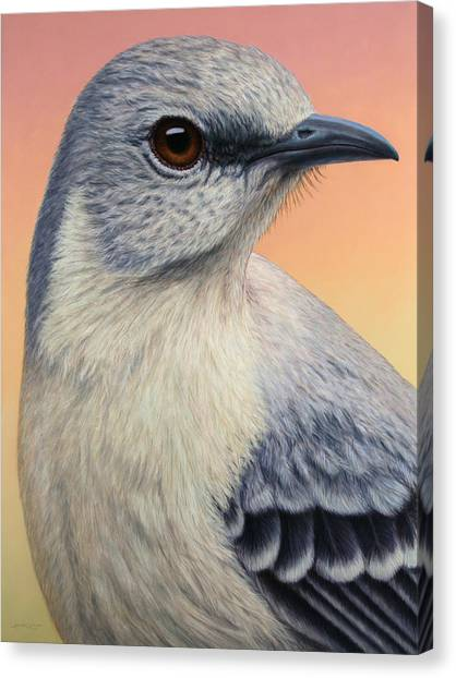 Mockingbird Canvas Print - Portrait Of A Mockingbird by James W Johnson
