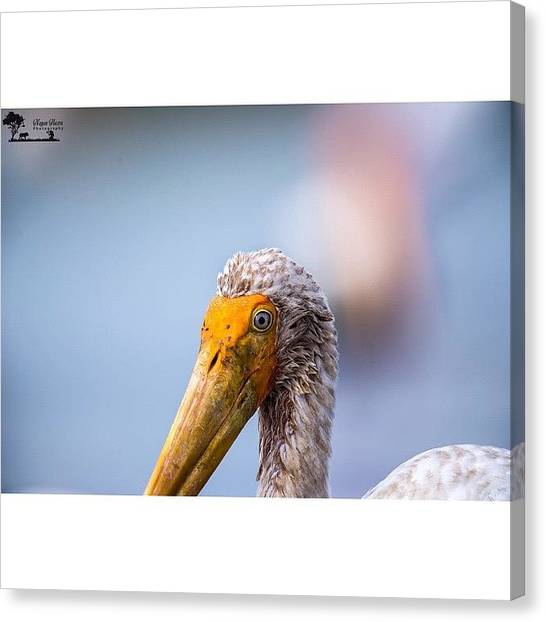 Storks Canvas Print - Portrait Of A Painted Stork After by Nayan Hazra