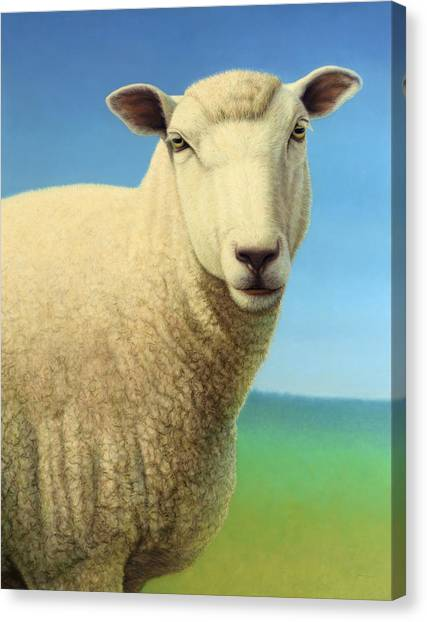 Farm Animals Canvas Print - Portrait Of A Sheep by James W Johnson