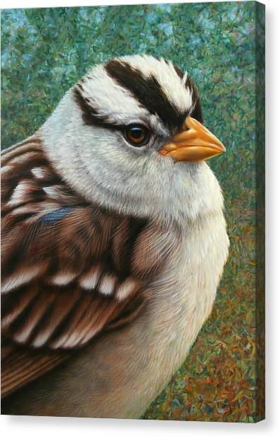 Sparrows Canvas Print - Portrait Of A Sparrow by James W Johnson