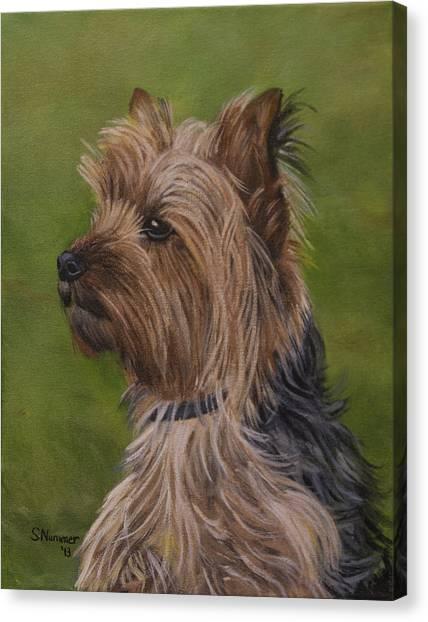 Portrait Of A Yorkie Canvas Print