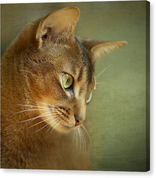 Cat Canvas Print - Portrait Of An Abyssinian Cat With Textures by Wolf Shadow Photography