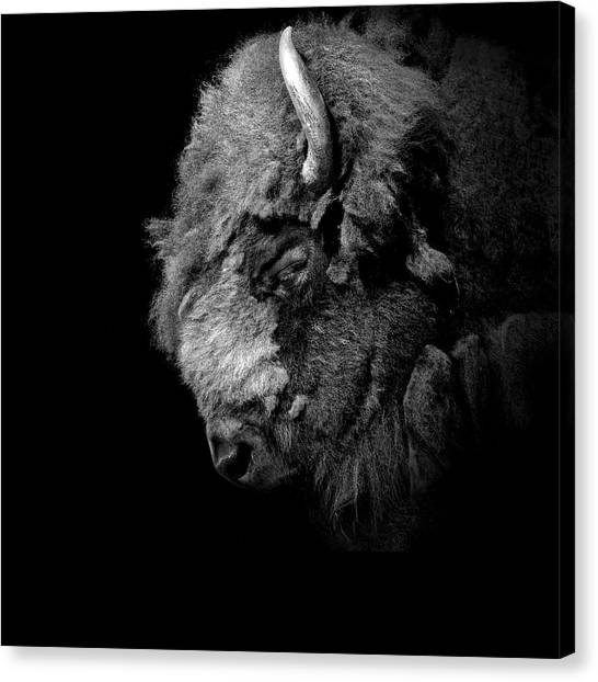 Bison Canvas Print - Portrait Of Buffalo In Black And White by Lukas Holas