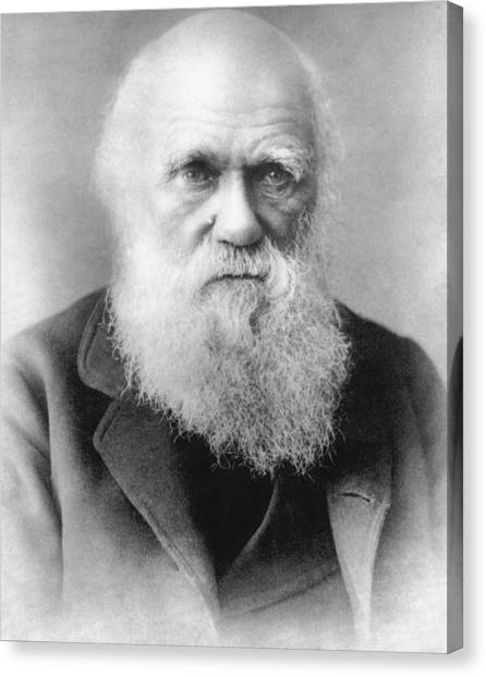 Head And Shoulders Canvas Print - Portrait Of Charles Darwin by Underwood Archives
