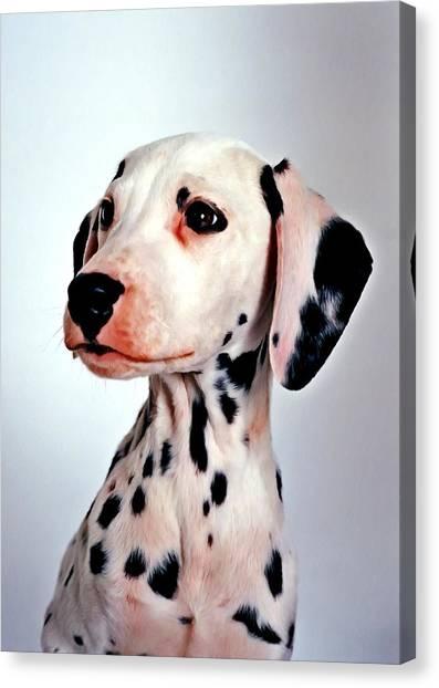 Portrait Of Dalmatian Dog Canvas Print