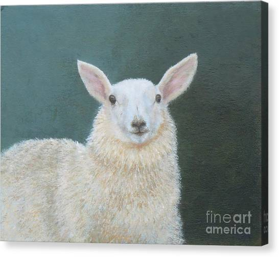 Portrait Of Ewe Canvas Print