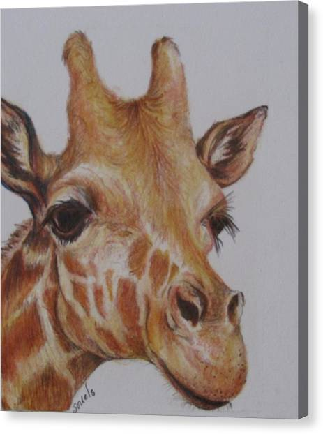 Portrait Of Giraffe Canvas Print