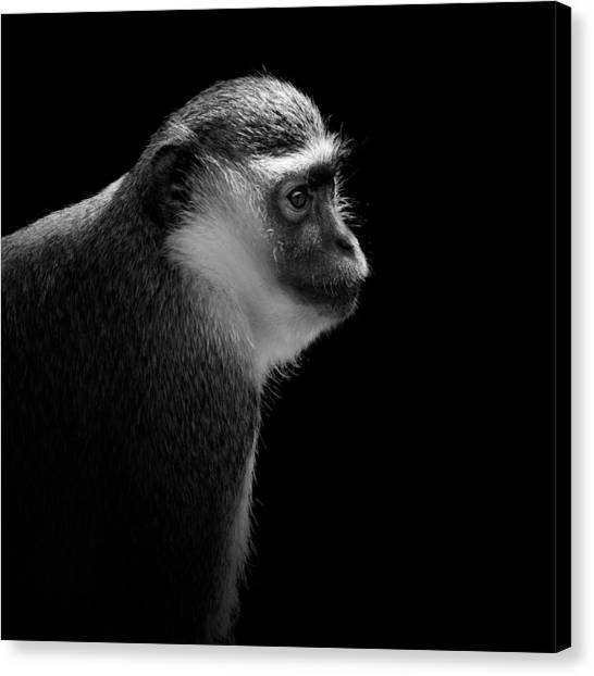 Primates Canvas Print - Portrait Of Green Monkey In Black And White by Lukas Holas