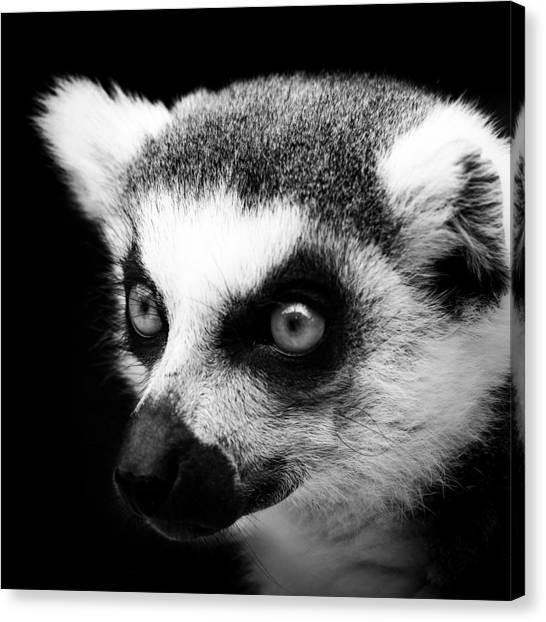 Black And White Canvas Print - Portrait Of Lemur In Black And White by Lukas Holas