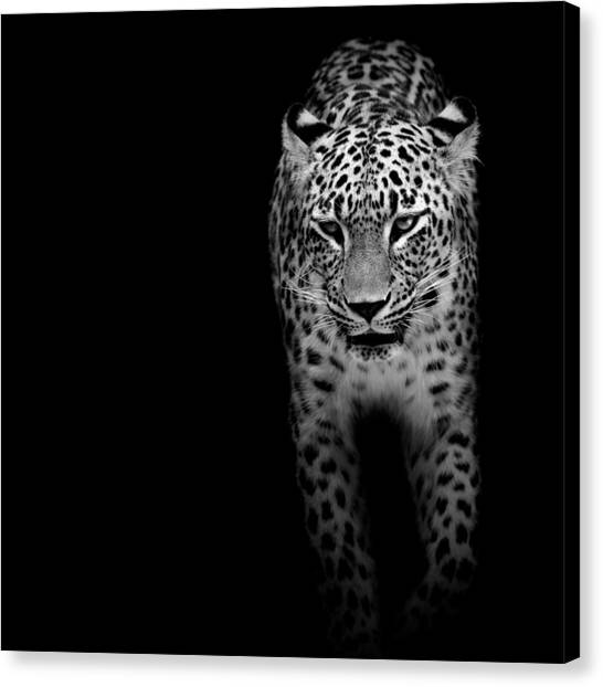 Zoo Canvas Print - Portrait Of Leopard In Black And White II by Lukas Holas