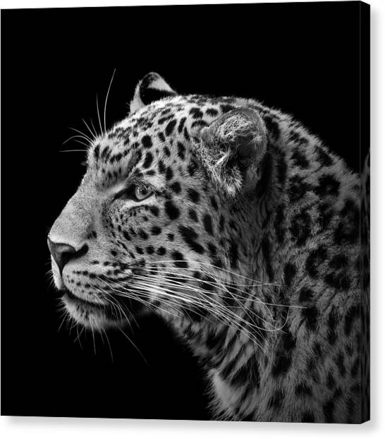 Zoo Canvas Print - Portrait Of Leopard In Black And White IIi by Lukas Holas