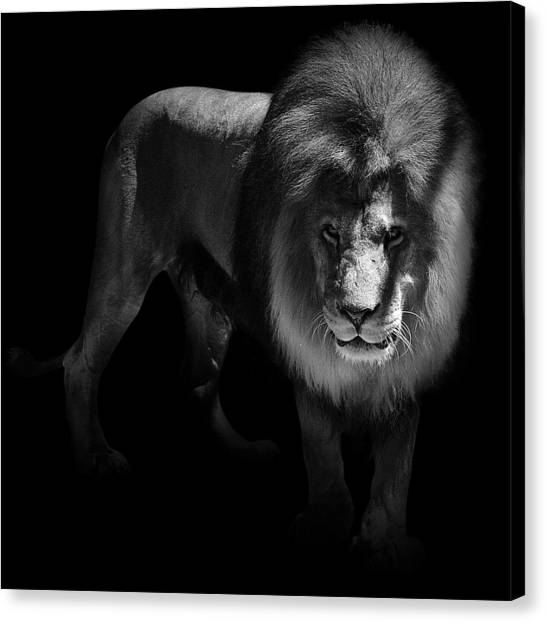 Zoo Canvas Print - Portrait Of Lion In Black And White by Lukas Holas