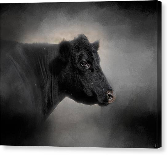 Portrait Of The Black Angus Canvas Print