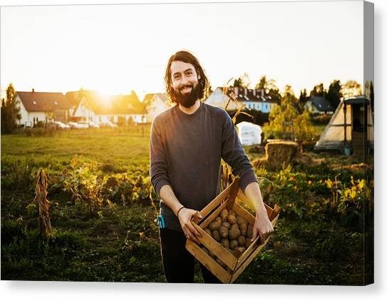 Portrait Of Urban Farmer Holding Crate Of Potatoes Canvas Print by Tom Werner
