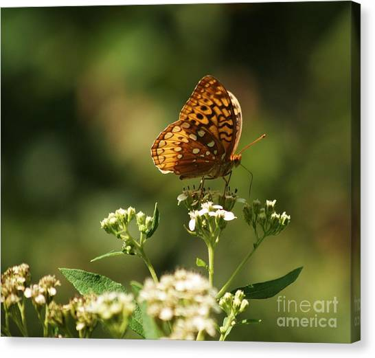 Posing For The Picture Canvas Print