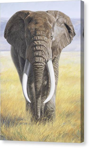 Bulls Canvas Print - Power Of Nature by Lucie Bilodeau