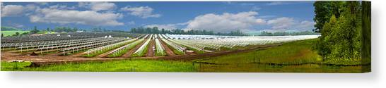 Solar Farms Canvas Print - Power Of The Sun by Jim Finch