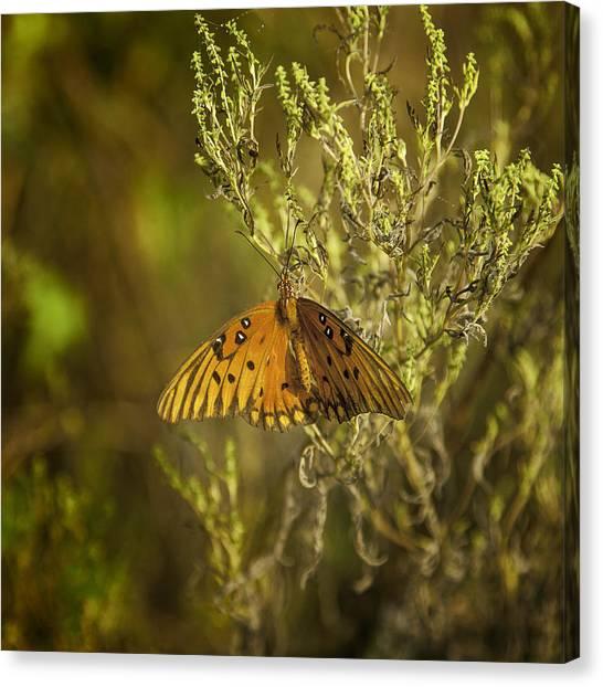 Prairie Butterfly Canvas Print