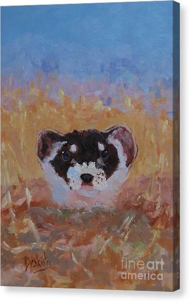 Black-footed Ferret Canvas Print - Prairie Sunrise by Alicia Drakiotes