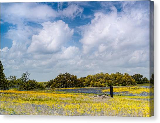 Phlox Canvas Print - Prairies And Rolling Meadows Of Texas In Springtime - Wildflowers Blooming In Stockdale by Silvio Ligutti
