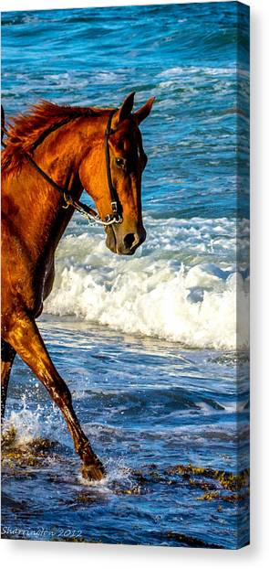 Prancing In The Sea Canvas Print