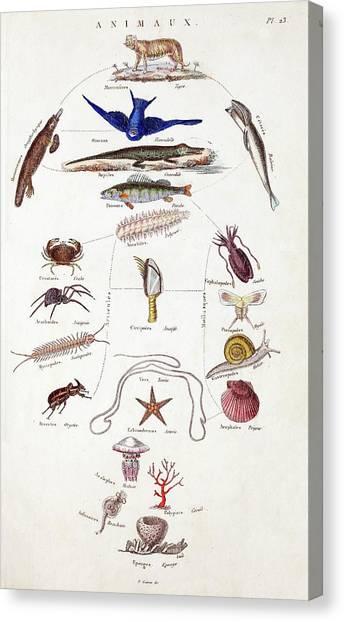 Millipedes Canvas Print - Pre-darwinian Taxonomy Confusion by Paul D Stewart