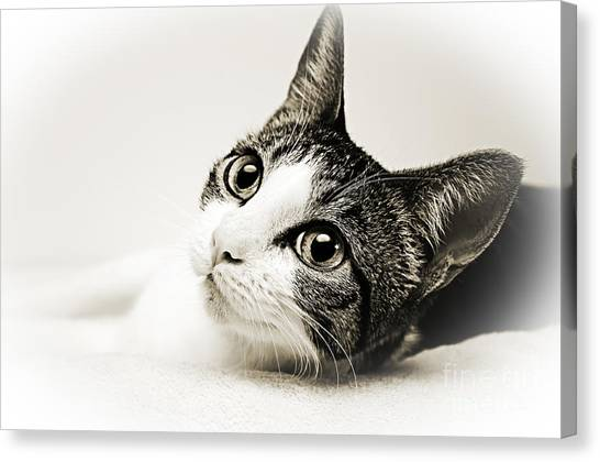 Precious Kitty Canvas Print
