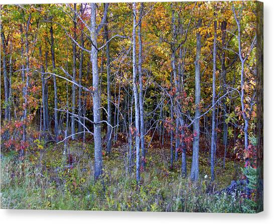 Preparing For Fall Canvas Print